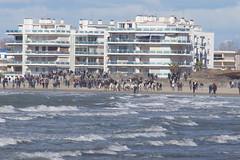 DSC07194 (chris30300) Tags: grau du des le chevaux roi plages abrivado taureaux