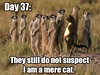 Mere Cat (BrainofJT) Tags: silly funny lol memes puns pundamentals