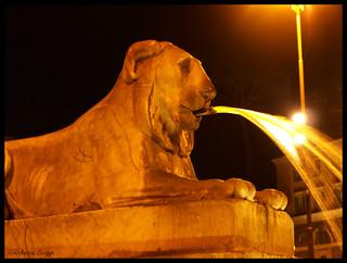 The popular lion