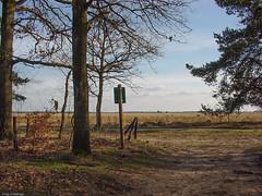 Dwingeloo (Chris Wielenga) Tags: old nature netherlands spring 2000 sonycybershot