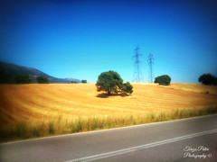 Driving home (Terezaki ✈) Tags: road trip travel trees light summer vacation sky art field yellow landscape photography gold photo spring day searchthebest hellas roadtrip athens greece grecia pictureperfect 2014 naturesfinest attiki location4 希腊 ελλάδα 100faves 50faves 100favs αθήνα anawesomeshot flickrdiamond theperfectphotographer