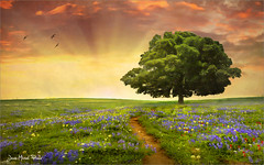 To the tree (Jean-Michel Priaux) Tags: flowers sunset sky tree nature field sunshine clouds photoshop way landscape alone lonely paysage arbre hdr chemin solitaire seul plaine lonesome priaux