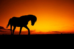 horse-silhouette (georgepeirson) Tags: adobe photoshop elements photo photograph manipulation horse silhouette sunset