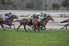 IMGP5539 (petercan2008) Tags: carreras caballos galope hipodrómo madrid españa