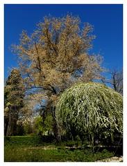 Spring (éric) Tags: spain madrid jardin botanical imagedatasmg935f14224f17100 uploadscript imagemagick im:opts=rotate90level510008 photo:id=2017040215222233782005296ojpg españa
