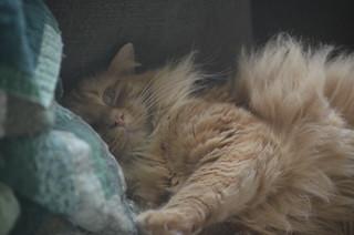 Wake UP Prince