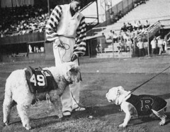Historic (University of Redlands Bulldogs) Tags: blackandwhite vintage bulldog mascot deacon blackandwhitebulldogdeaconmascotvintage