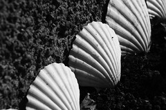 Quite Contrary (TempusVolat) Tags: bw shells white black lines wall canon garden eos blackwhite mary line contrary canoneos gareth tempus 60d canon60d volat wonfor mrmorodo garethwonfor tempusvolat