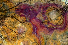 Night Sky Moon Branches Halloween Haunted TLB296 (Dallas Photo Today) Tags: trees sky moon halloween night branches eerie haunted