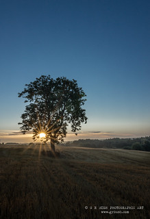 Sunrise at the lonely tree