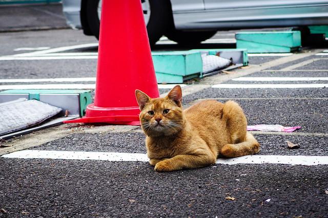 Today's Cat@2013-10-11
