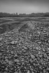 Burrator reservoir (Bradley Coles) Tags: trees white black texture monochrome landscape mono raw sony kitlens reservoir devon 1855mm dartmoor burrator a55