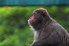 image (Ricardo Araujo Leite) Tags: animal canon photography monkey bokeh natureza ngc macaco fotografia animais animalplanet animale fundo foco desfoque