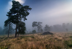 Morning fog dissolving (@photobjorn) Tags: morning fog landscape sweden wideangle d200 tokina12244 apsc colorefex