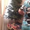 Arbolito navideño....en proceso (MIGUEL CENTENO SILVA) Tags: sonora guaymas opus dei pri amorc cajeme rosacruz
