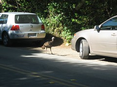 """Muir Woods • <a style=""""font-size:0.8em;"""" href=""""http://www.flickr.com/photos/109120354@N07/11042896536/"""" target=""""_blank"""">View on Flickr</a>"""