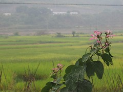 """Guangxi rice fields • <a style=""""font-size:0.8em;"""" href=""""http://www.flickr.com/photos/98061816@N08/11259216336/"""" target=""""_blank"""">View on Flickr</a>"""