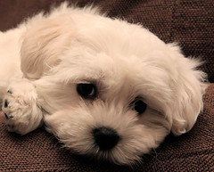 IMG_5601 (Pedro Montesinos Nieto) Tags: perro mascotas laedaddelainocencia frágiles