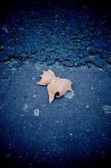 Les petites feuilles d'hiver (Calinore) Tags: street city autumn paris fall leaf solitude pavement abandon rue ville trottoir feuille derelixion