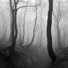 Enchanted Forest (Martin Rak Photography) Tags: trees light bw white mist black art nature fog forest dark square landscape mood republic czech fine amosphere