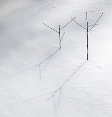 Tiny Dancers (Dalliance with Light (Andy Farmer)) Tags: winter shadow white snow abstract nature lines sticks day pwwinter