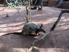 Wild Life Sydney Zoo (wiredforlego) Tags: animal zoo au sydney australia syd