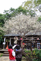 () Tags: canon  plumblossom plumflower  1635mmf28l  1dx whiteplumflower
