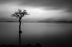 Lone tree, Loch Lomond (Annette_C) Tags: white mountain lake black tree water monochrome scotland loch trossachs lochlomond lochkatrine lochard