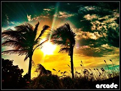 May 30th Sunrise  Dania Beach (*Arcade) Tags: sky sun beach nature beautiful clouds colorful pretty florida gorgeous awesome palmtrees dania daniabeach aunrise iphoneography uploaded:by=flickrmobile flickriosapp:filter=nofilter