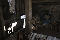 Skinned (ingetje tadros) Tags: africa leather skin morocco fez atlas medina production dye meknes tanneries animalhides chouwara leatherproduction leathersouq ingetjetadros tanneriesoffez