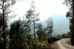 Narrow & Long  Winding  Road (Prayitno / Thank you for (9 millions +) views) Tags: park mountain indonesia java mt view panoramic east mount national winding gunung narrow jawa taman timur bromo tengger batok nasional sempit konomark
