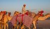 Deserts and Camels 131107 17_18_58 (Renzo Ottaviano) Tags: race al desert united racing course emirates camel arab lorenzo races camels corrida emirate deserts uniti renzo unis arabi carrera corsa emirati unidos camellos chameaux árabes kamelrennen صحراء سباق arabes ottaviano camelos emiratos emirados vereinigte arabische cammelli émirats الهجن هجن سباقات المرموم marmoun