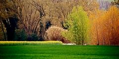 """colori di primavera ("""" paolo ammannati """") Tags: flowers italy panorama primavera me foglie alberi spring italia photographer top natura io fiori terra colori umbria rami bosco fioritura paoloammannati complimenti effettinaturali"""