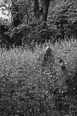 Blidworth Church Graveyard (Benedictine1) Tags: bw cemetery memorial aap sacredspace year2015