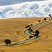Stormy parallel route | Stürmische Kornfeld Kurven