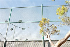 tennis court lamp post -  tree telepathy over stuck tennis ball in chain link fence (Lynn Friedman) Tags: nobody favstock soft california 94015 pacificheights sanfrancisco chainlinkfence cyclonefence tenniscourt outside wall tree lamppost retro midcenturymodern