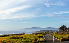 Moonstone Beach (RedHatGal: Barbara Butler/FireCreek Photography) Tags: cambria moonstonebeach ca wildflowers beach waves sky walkingpath outdoor landscape barbarabutlerphotography firecreekphotography redhatgal