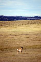 American Prairie Reserve 9
