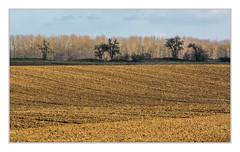 Agricultural landscape (bavare51) Tags: acker ackerlandschaft landscape bume trees mecklenburg frühjahr agricultural