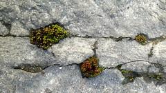 2017-03-12_05-24-52 (Bochum1805) Tags: stone sten fog joint moss mossa stoneconservation buildingconservation byggnadsvård biolgocicalcolonization openmortarjoints crack repoint