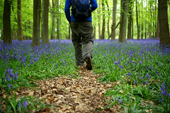 Bluebell Heaven (Nada*) Tags: wood uk flowers blue trees england man flower tree green nature bluebells forest wow walking countryside woods hiking walk vegetation bloom flowering bluebell ashridge inbloom ashridgeestate