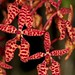 Renanthera monachica – Merle Robboy