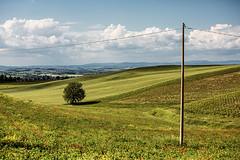 ...nearby montalcino, tuscany..... (ehutphoto) Tags: italien italy tree landscape tuscany toskana