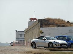 Two Big Cats. (The TFJJ) Tags: silver f isleofwight type jag jaguar isle v8 wight sportscar v6 ftype jaguarftype