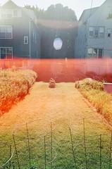 00300019 (lennoxr313) Tags: film 35mm canon fuji ae1 iso400 ishootfilm lightleak lensflare fujifilm filmisnotdead