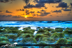 Ocean-Reef-Park-Sunrise-at-Singer-Island-Florida