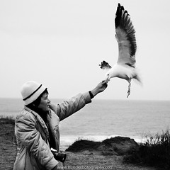Seagull Feeding (Buuck Photography) Tags: sanfrancisco california ca travel sea blackandwhite bw white black nature beautiful composition contrast person photography coast flying photo amazing different fotografie photographer photographie unique seagull gull explorer fineart perspective picture pic adventure story bayarea walnutcreek incredible bwphotography hwy1 fortbragg fotografi blackandwhitephotography fotografa buttecounty    buuck nhipnh d7000 potograpiya buuckphotos buuckphotography  liveathomelikeatraveler