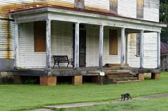 prowler (ANC'N'VA) Tags: house cat virginia pentax decay colonial va portroyal
