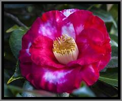 Toowoomba Flowers-006=