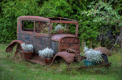 Rusty Antique Car Planter - Metchosin, Vancouver Island, BC, Canada (Toad Hollow Photography) Tags: canada texture abandoned car landscape rust bc antique rusty vancouverisland planter artifact hdr metchosin greatphotographers rurex ringexcellence dblringexcellence tplringexcellence eltringexcellence